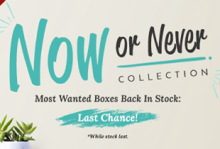 While Stocks Last: Now or Never Collection (Althea Box)